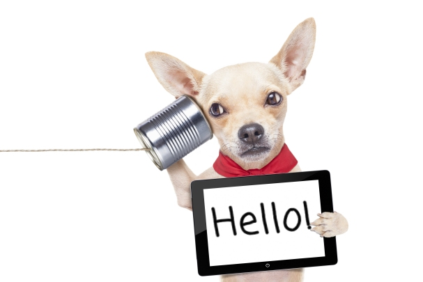 A dog holds a tablet which says hello contact Banbury web design