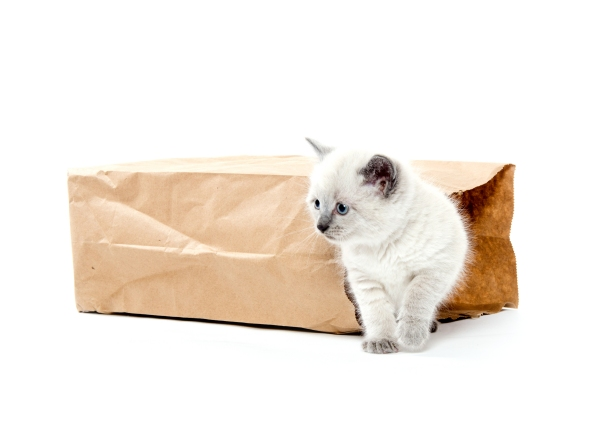 A kitten coming out of a paper bag - promote your website in Banbury